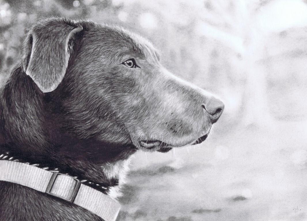 Timothy-Armstrong-Dog-2013_For-web-Medium